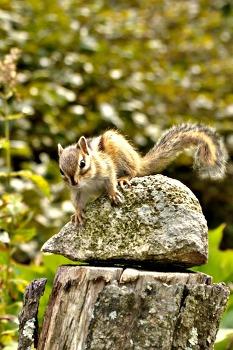 2012 탁상 달력 사진공모전 (가을) - 가을 다람쥐