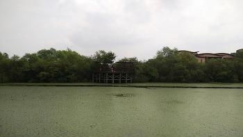 [경남 창원] 동양 최대의 철새도래지 주남저수지
