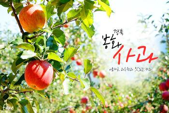 경북 봉화 사과농장에 다녀왔어요.