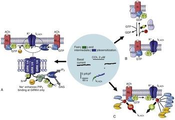 14장 베타-감마 소단위체와 인산화 효소