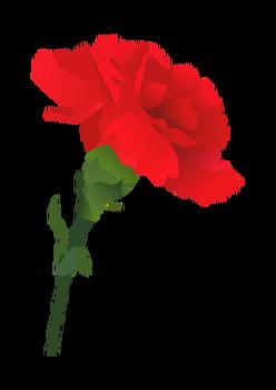 카네이션 꽃말 아시나요? 가정의 달, 5월의 꽃 '카네이션' 의미 알아보기! 어버이날 꽃 선물! 카네이션 관리법, 색깔별 의미, 어버이날 유래?