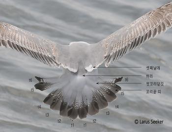 갈매기 꼬리의 부위별 명칭과 설명