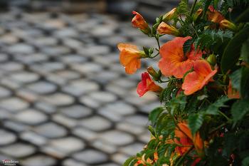 구중궁궐의 꽃