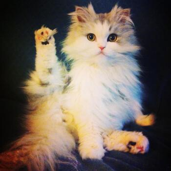 고양이에 대한 단상