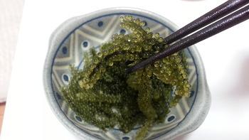 오키나와 특산물,바다의 캐비어 '우미부도(海ぶどう)'