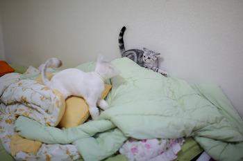 우리 고양이들 대치 상황