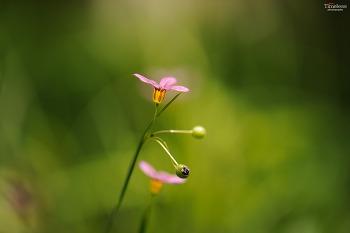 들꽃 #5