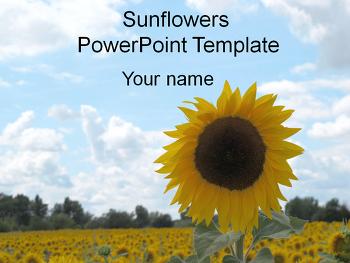 여름관련 피피티 테마 디자인/해바라기 파워포인트 템플릿 다운로드