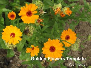 피피티 템플릿 배경/노란색 꽃 피피티 디자인 다운/무료 피피티 템플릿