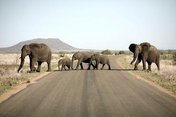 아프리카 캠핑카여행 Day 4 - 남아공 크루거 국립공원 / 사타라캠프 / 크로커다일 브리지 레스트 캠프 Crocodile Bridge Rest Camp