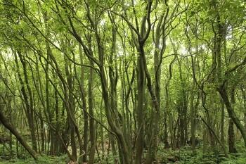 숲속에..숲은..