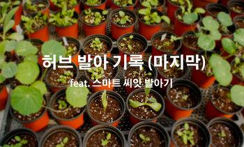 허브 발아 기록(마지막) : feat. 스마트씨앗발아기