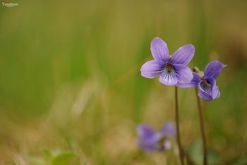 들꽃 #3