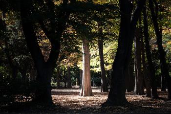 양재 시민의 숲