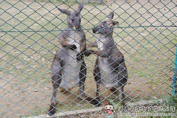 [서울대공원 동물원]사랑스러운동물 Best5 사막여우,붉은캥거루,화식조 등