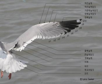 갈매기 날개의 부위별 명칭과 설명
