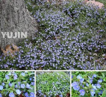 유진의 소박한 정원-언땅을 뚫고 나온 3월의 꽃들