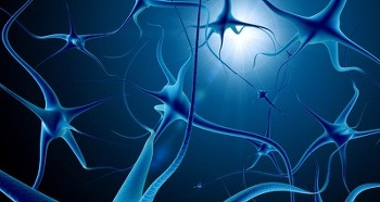 사람 두뇌의 발달