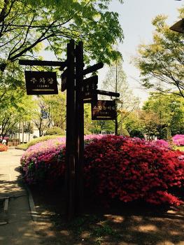 인천 부평공원 풍경 사진,봄꽃 사진