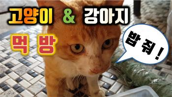 고양이와 강아지의 사료 먹방 영상입니다.