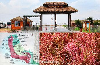 [푸드칼럼] 8월에 떠난 바다와 초원, 홍해탄과 공중초원