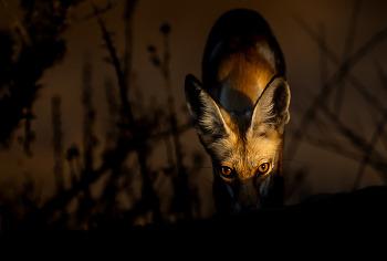 2019 소니 월드 포토그래피 어워드 오픈 콘테스트 '자연과 야생 생물(Natural World & Wildlife)' 부문의 주요 수상작을 소개합니다.