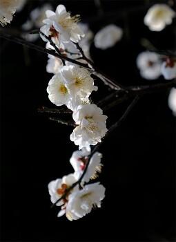 4~5월에 피는 명자나무꽃까지 핍니다.
