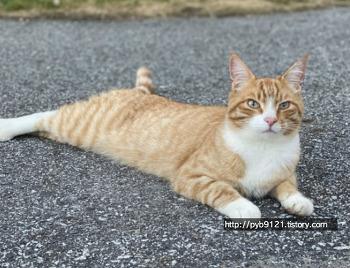 노르웨이의 고양이 : 주인이 있는 노르웨이의 길고양이(?)들