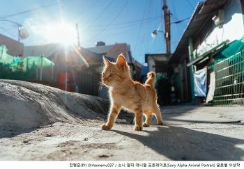 글로벌 반려동물 사진전 '소니 알파 애니멀 포트레이트' 최종 수상작 발표