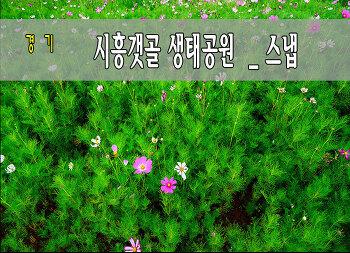 6월의 갯골생태공원