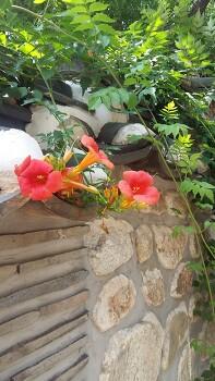 민화 참고 꽃사진 능소화