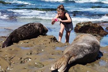 미국 캠핑 @ 서퍼의 천국 San Elijo State Beach Campground 2/2 - 라호야 해변 (La Jolla Beach)