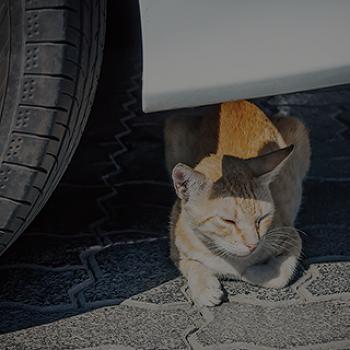길고양이와 자동차를 지키는 '시동 전 노크 세 번!'