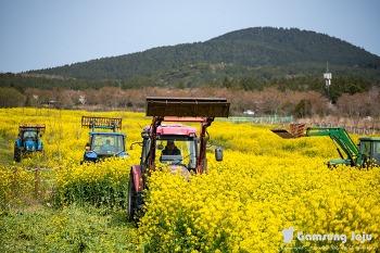코로나19로 갈아 엎어진 한국의 아름다운 길