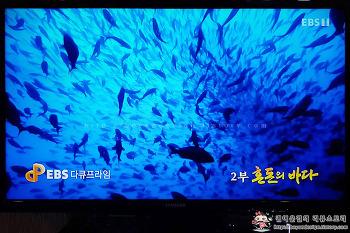 [EBS 다큐프라임]진화와 공존의 섬 갈라파고스 제2부 혼돈의 바다