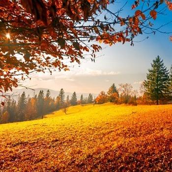 10월 18일은 산의 날! 건조한 가을철, 산불 예방법