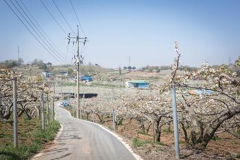 4월 18일 성환 왕지배꽃길 번개
