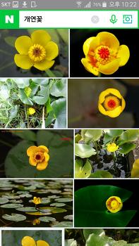 민화 참고 꽃사진 - 연꽃, 연지도에 작은 꽃들