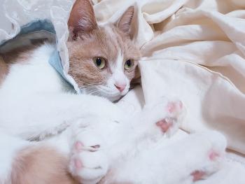 고양이 치과 / 미요 레진 치료