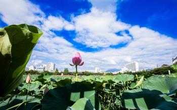 푸른 하늘과 연꽃