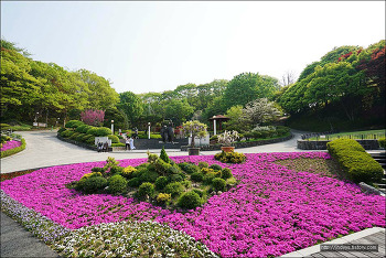 <세종>봄꽃여행(3)- 봄꽃 명소 - 베어트리파크