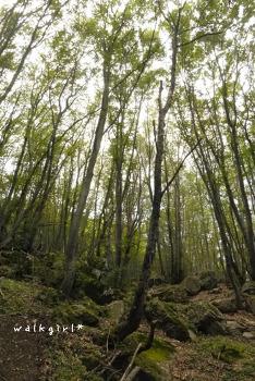 불가리아탐험기) 바얀 폭포를 보기 위한 투어,  Sofia Green Tour