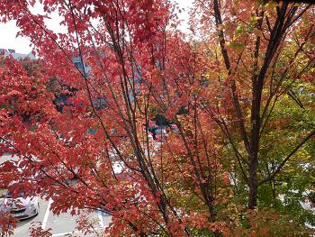 가을은 역시 단풍!