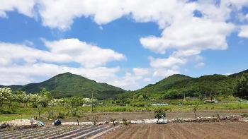 대전 성북동(금수봉)/20200519