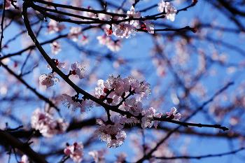 4월~5월에 피는 꽃까지 피다니