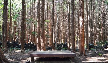 [제주에서 살아볼까? 38편] 현지인들이 찾는 힐링 명소, 머체왓 숲길