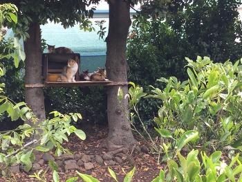 길고양이 급식소 (캣타워?ㅋ)