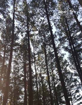 광양 백운산 자연 휴양림 황톳길