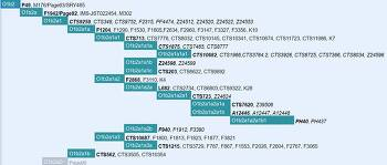 성씨(姓氏)별 유전자(gene) DNA 하플로그룹(Haplogroup)SNP 관계 정리