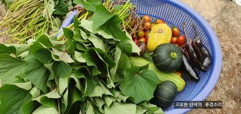 텃밭채소, 수확의 기쁨과 건강한 간식